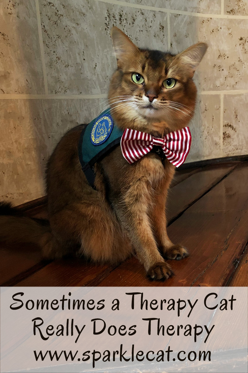 Sometimes a therapy cat really does therapy, as Summer discovers at the children's hospital.