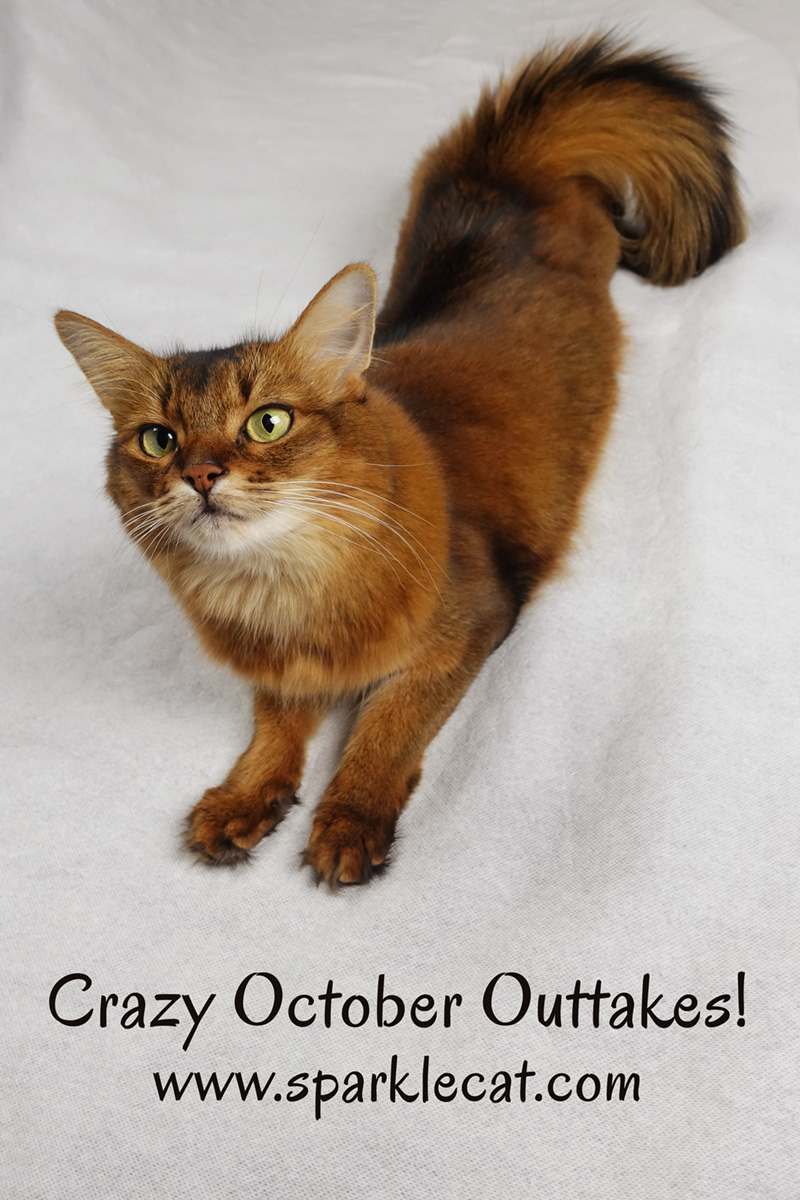 Summer has some crazy October cat outtakes for you!