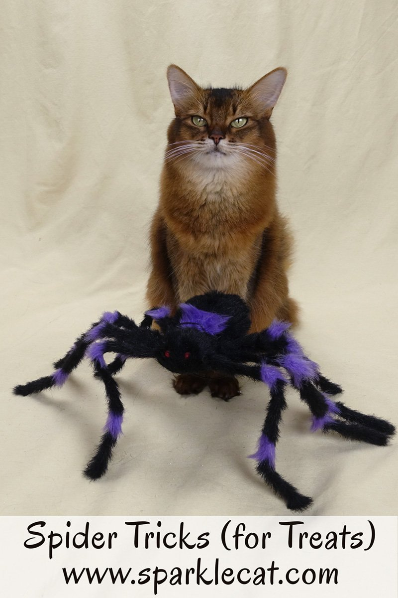 Summer uses a dumb looking Halloween spider to learn a new trick.