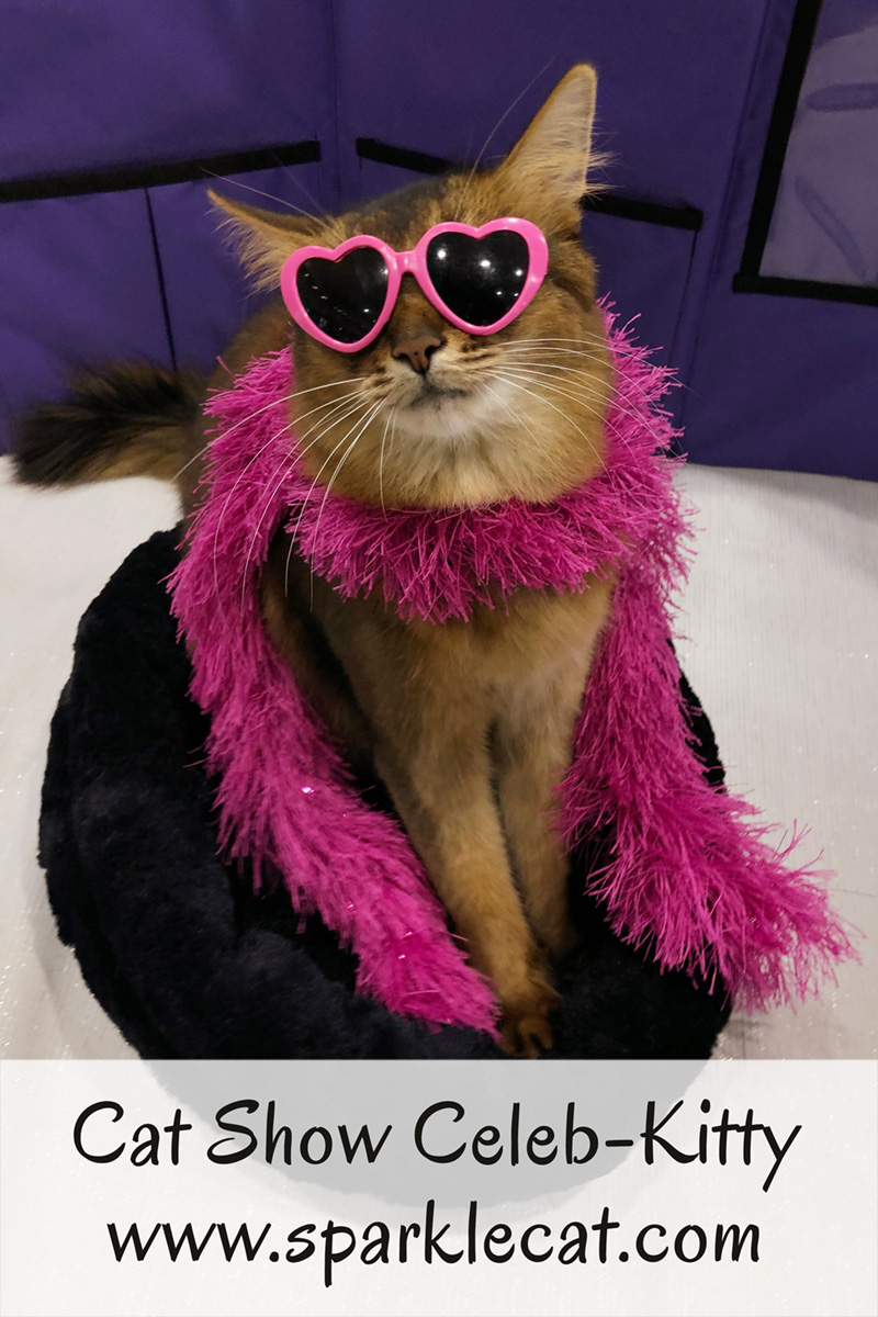 Summer is a celeb-kitty at this past weekend\'s local cat show.