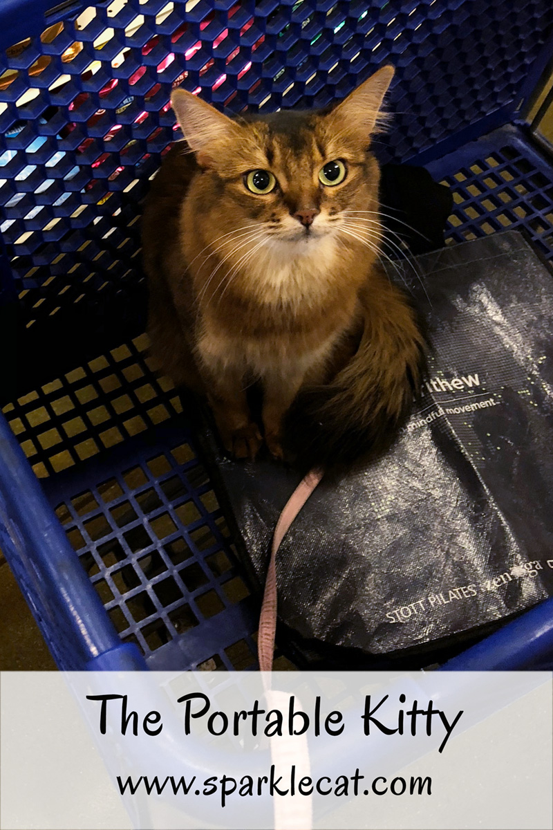 Summer goes to PetSmart to do some shopping - and visiting.