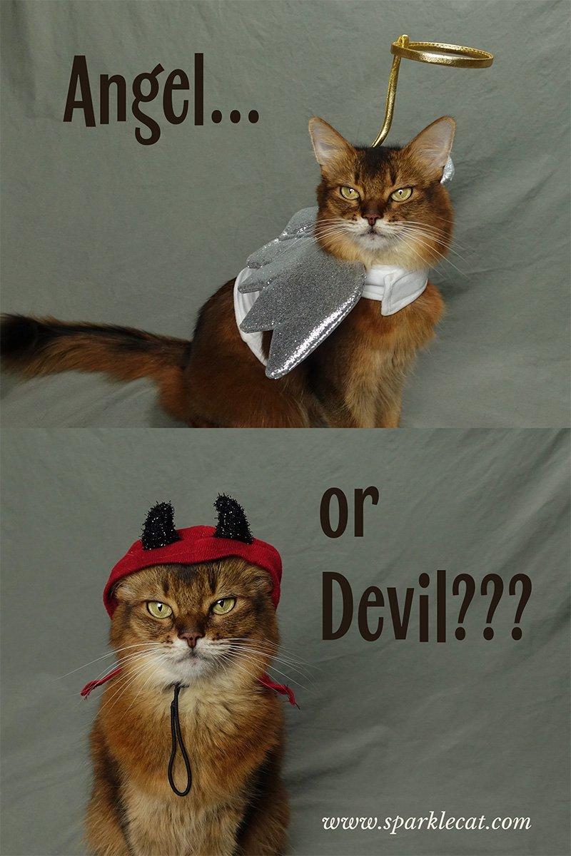 Angel or Devil - Poll!