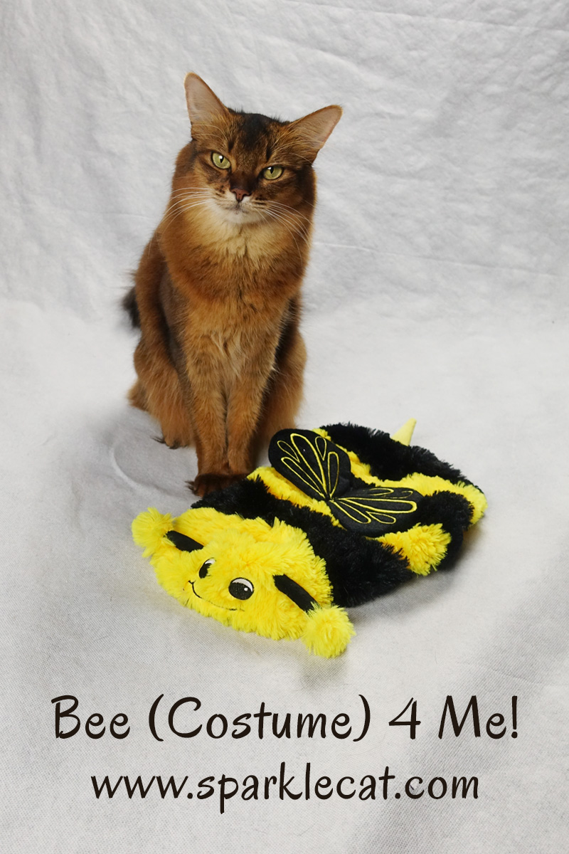 Summer's human brings home a silly bee costume for cats.