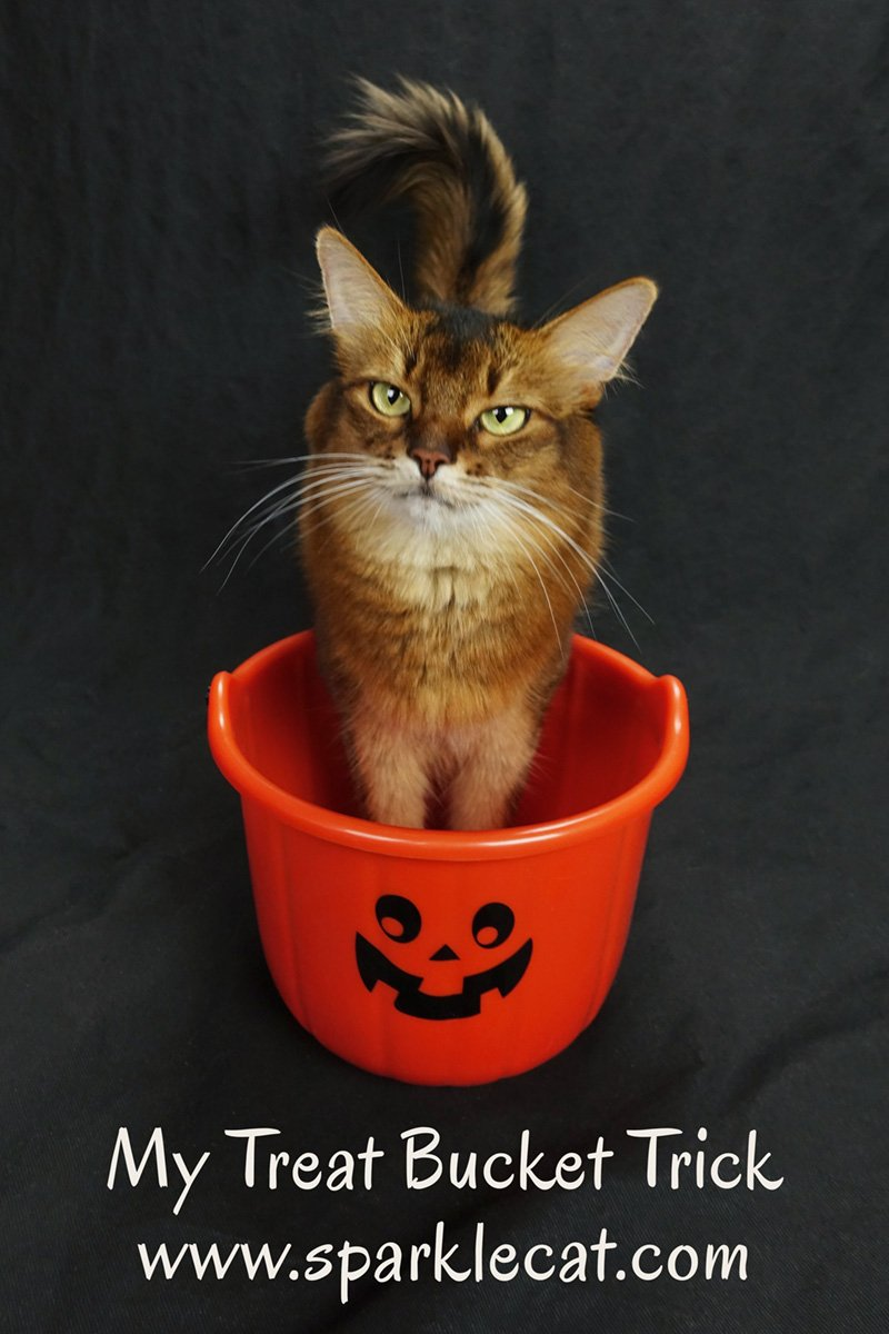 Summer explains the treat bucket trick, where she puts her front paws in the bucket.