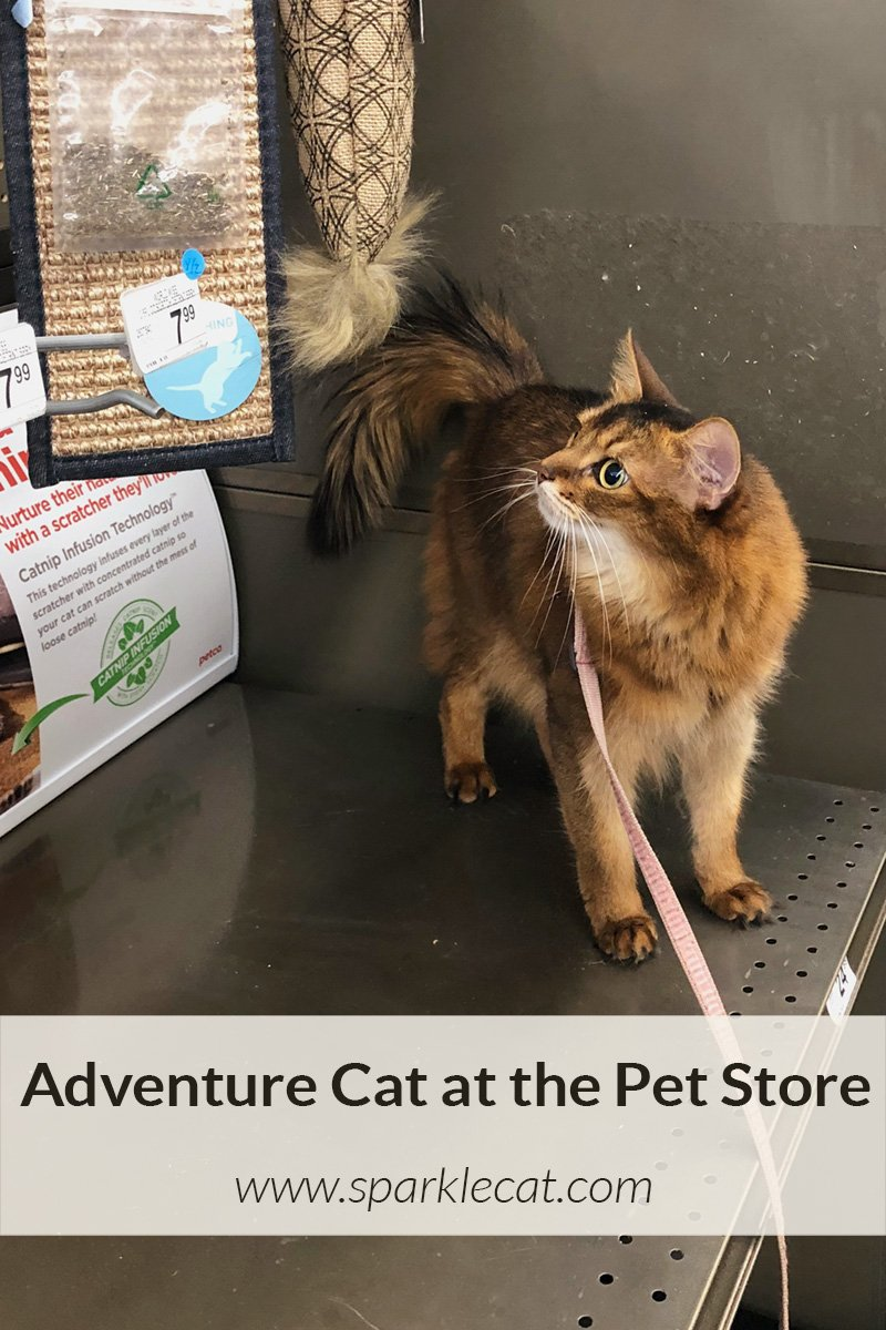 What I Saw at the Pet store