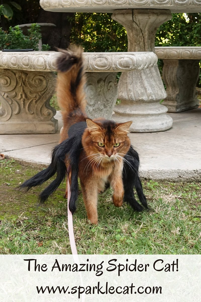 The (Not So) Amazing Spider Cat