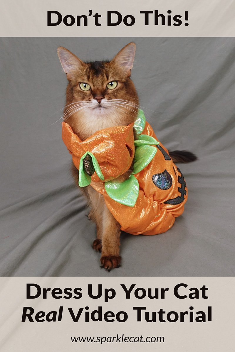 All New Fun Video on How to Get a Cat to Wear a Halloween Costume!