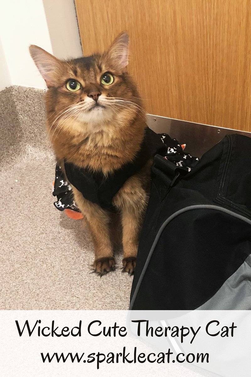Summer wears her wicked cute Halloween dress on her therapy cat visit to the children\'s hospital.