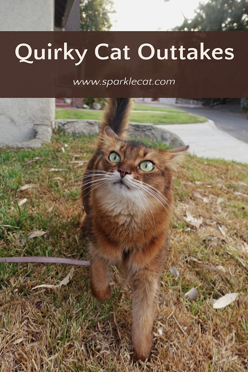 Quirky Cat Outtakes
