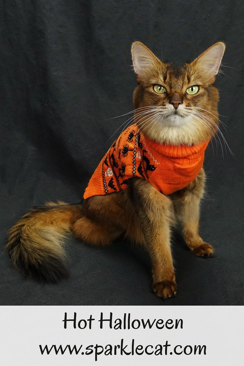 Is this year going to be a hot Halloween? Because Summer is waiting for the weather to cool off so she can wear this sweater.