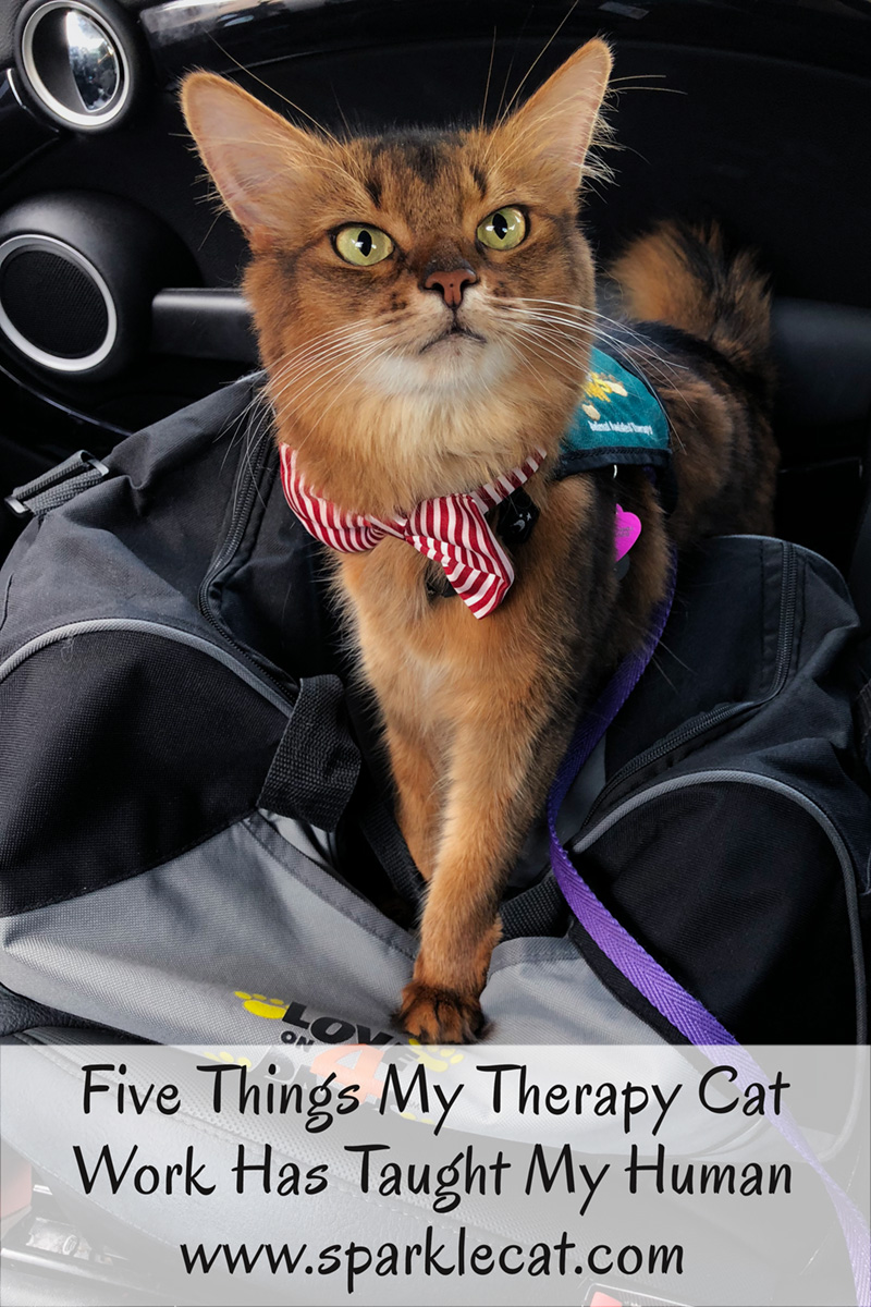 Here are five things Summer's therapy cat work has taught her human.