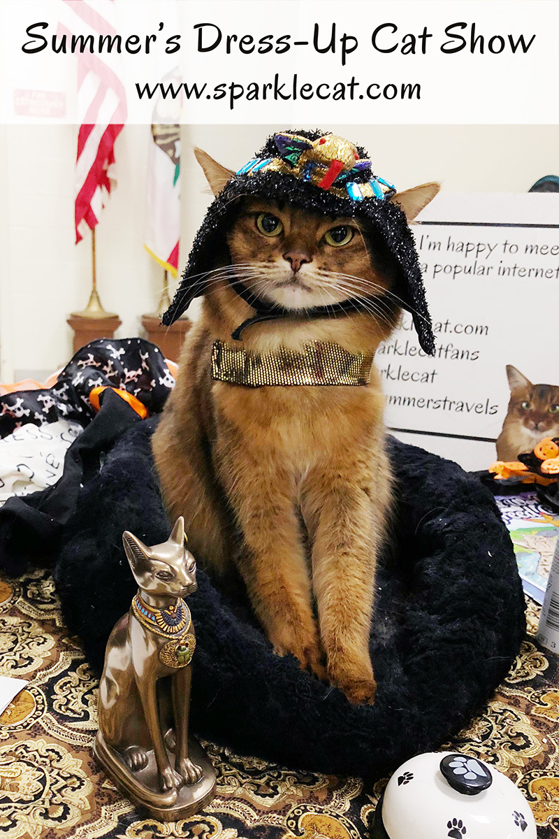 At an October cat show, Summer gets to play dress up.