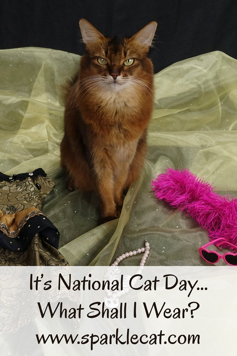 It\'s National Cat Day, and Summer is wonder what she should wear to all the glamorous parties.