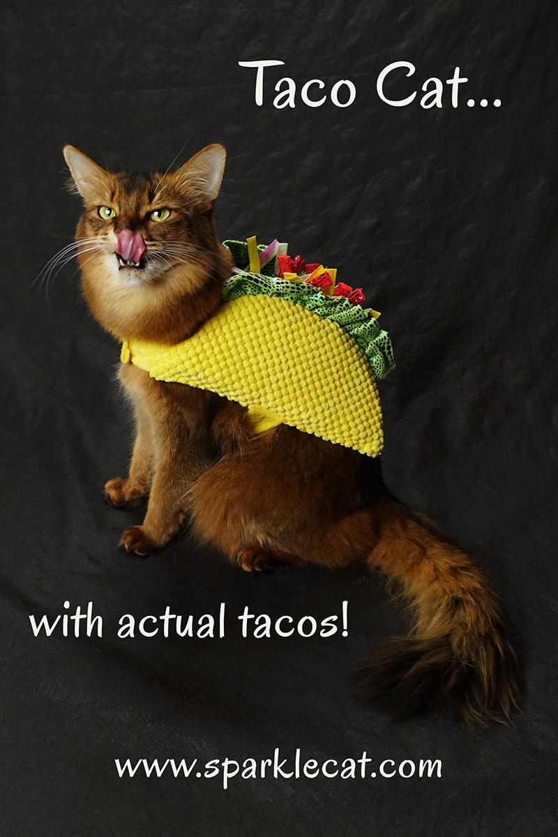 Summer is taco cat... and there are actual tacos involved in this blog post!