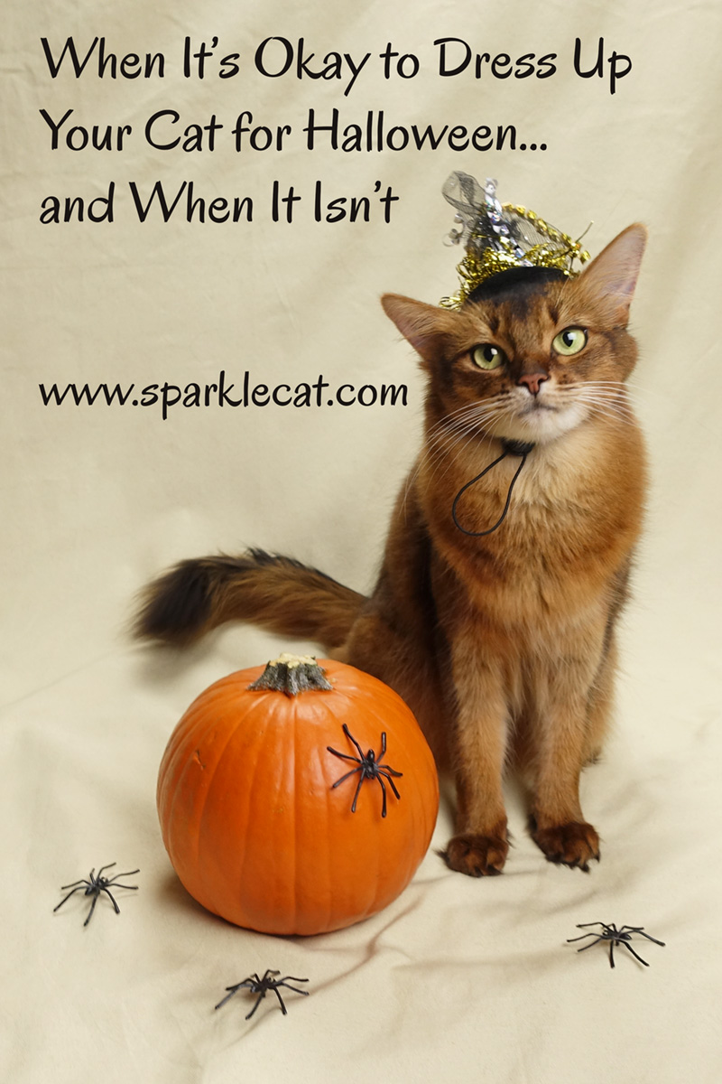 Summer has some advice on when it's okay to dress up your cat for Halloween... and when it isn't.