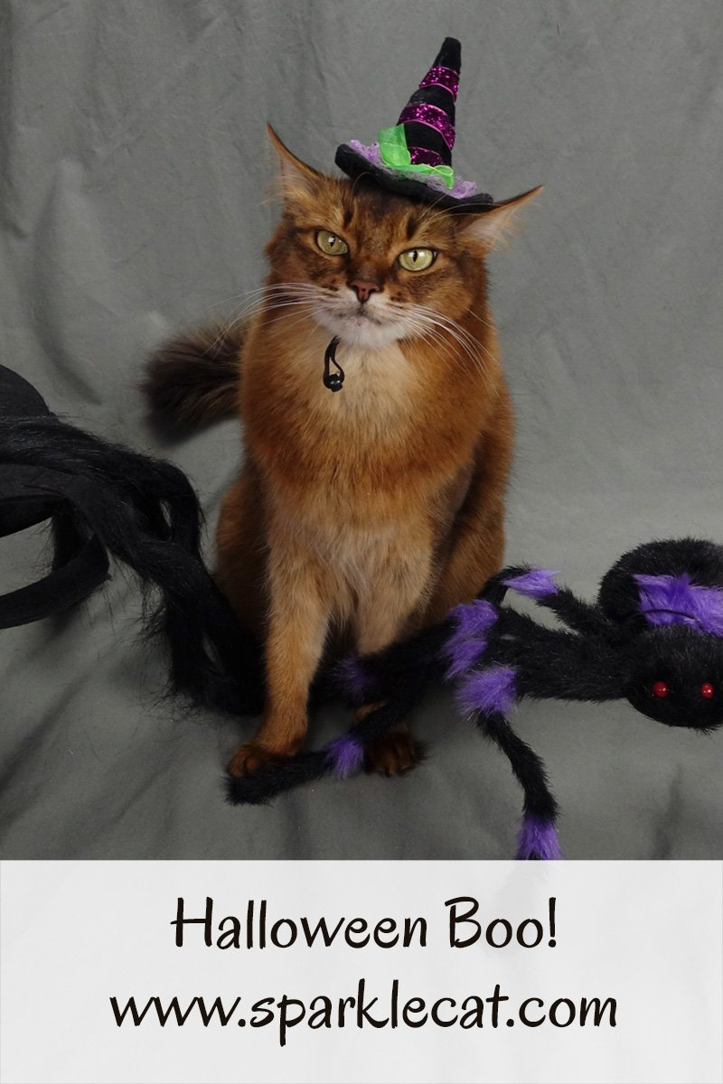 Summer is unhappy with this year\'s Halloween photo shoot... until she takes matters into her own paws.