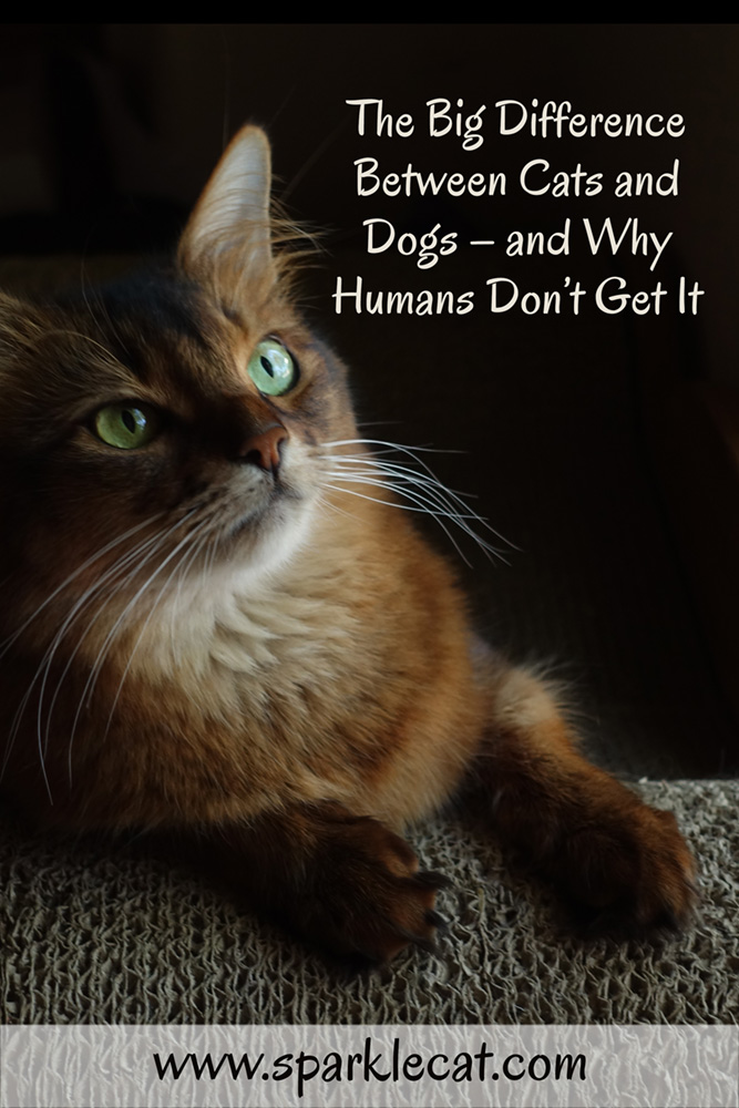 The Big Difference Between Cats and Dogs - and Why Humans Don\'t Get It