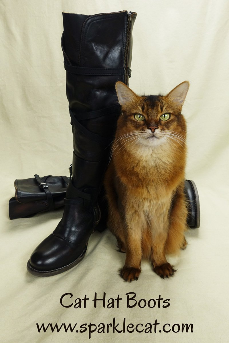 Summer\'s human gets a new pair of boots... that include a cat hat!