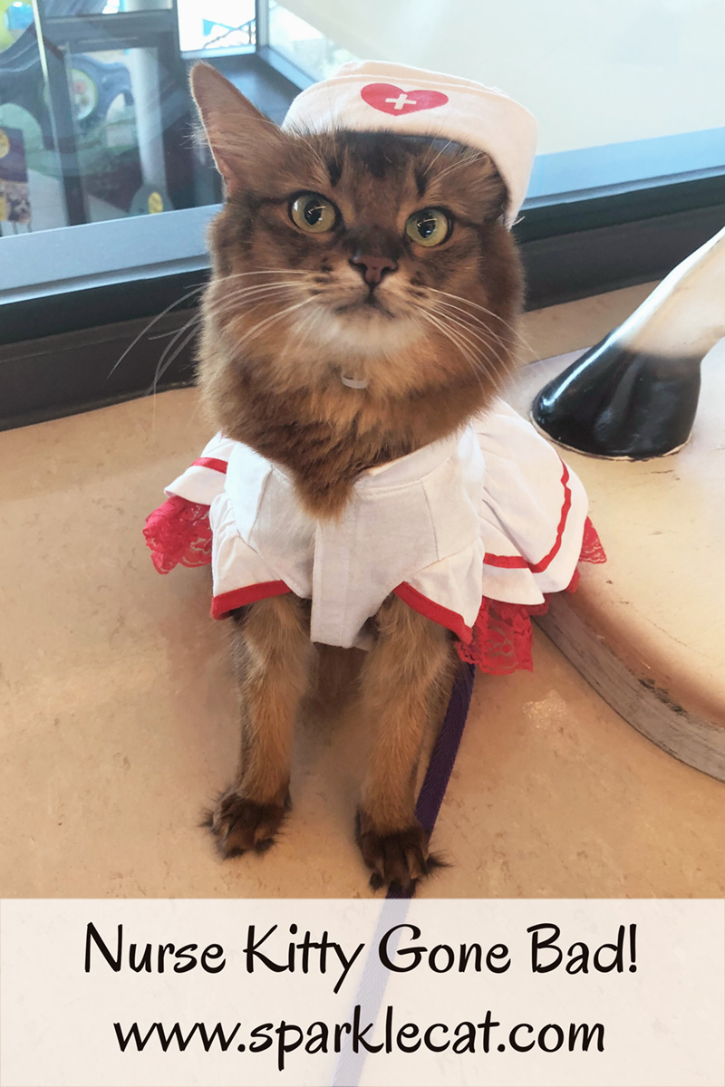 When a kitty nurse goes bad, outtakes happen!