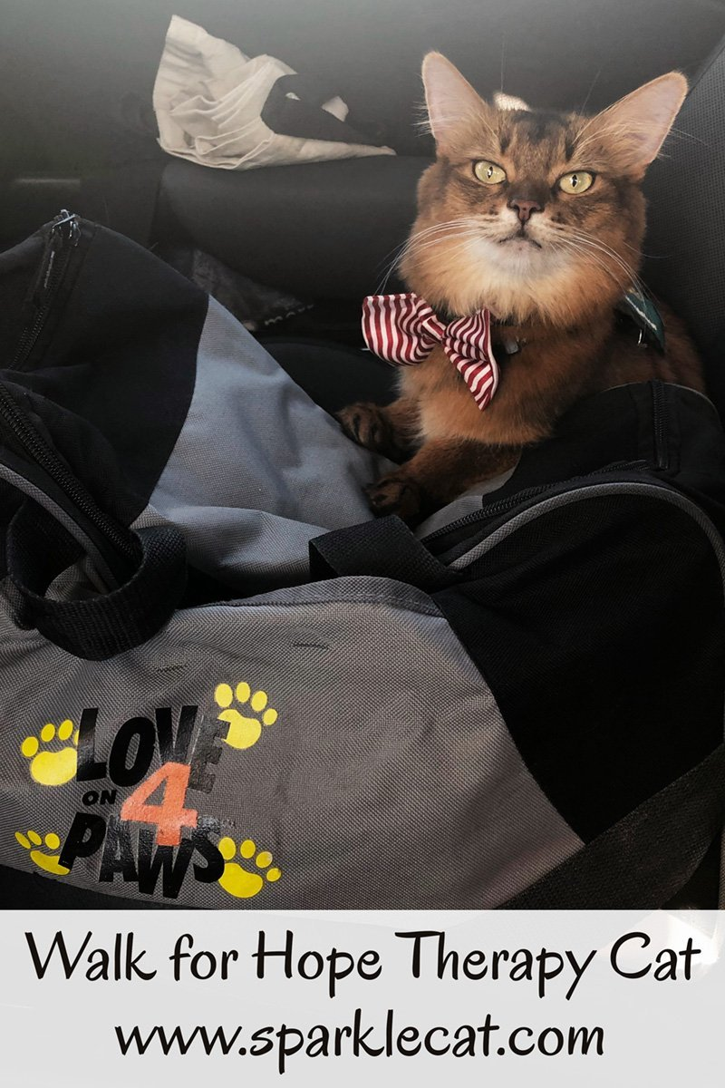 Summer does therapy cat duties at City of Hope\'s Walk for Hope event.