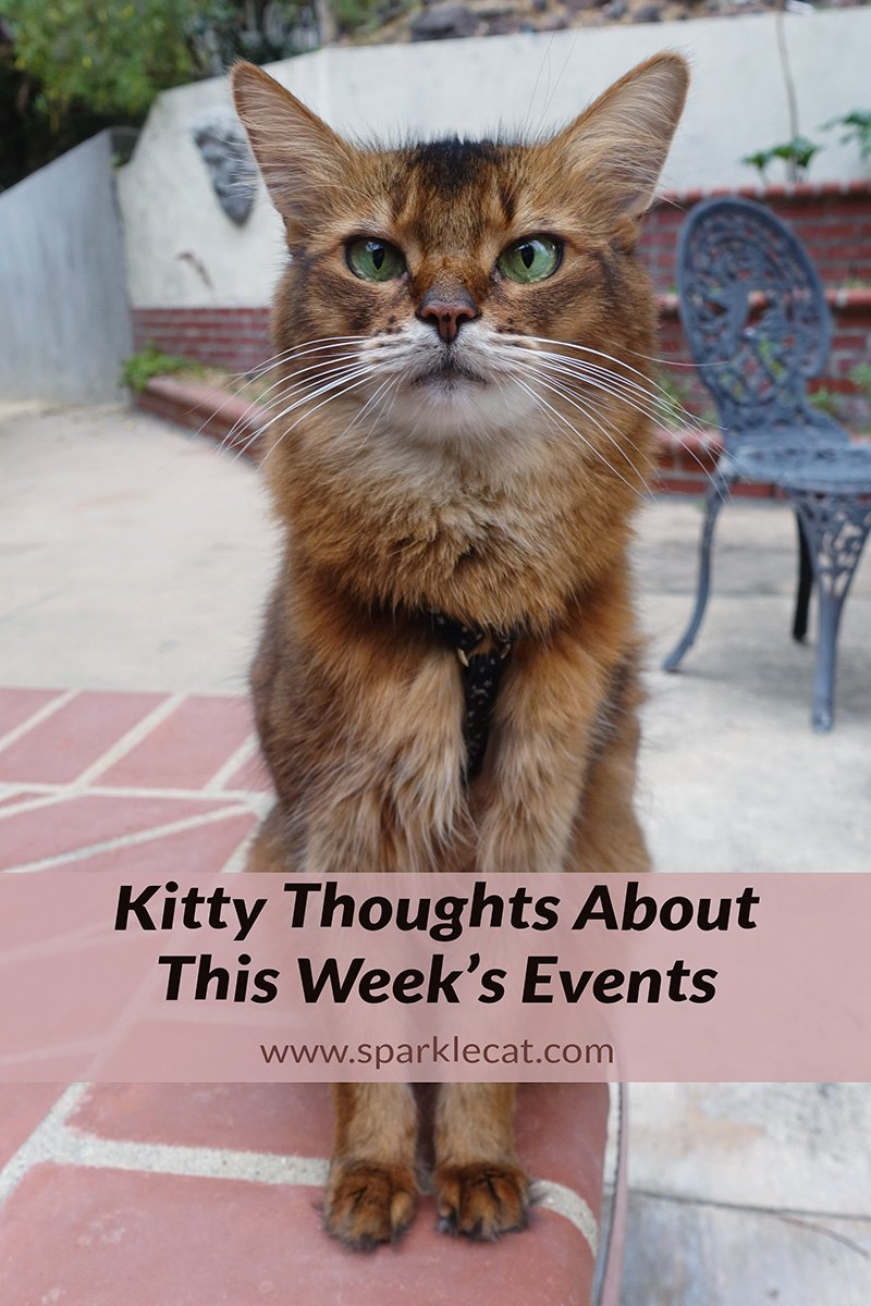 Kitty Thoughts About This Week\'s Events