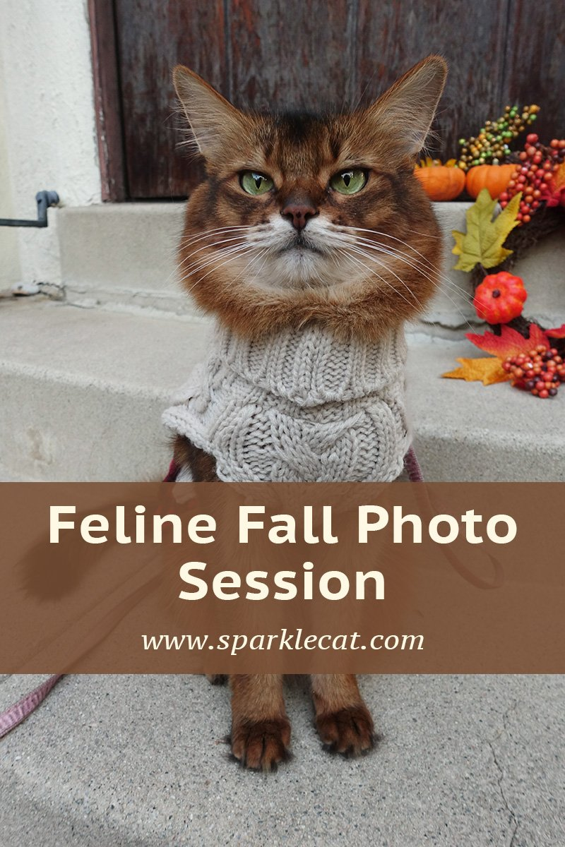 Feline Fall Photo Session