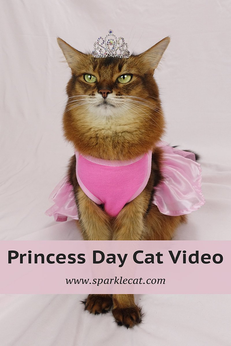 It\'s Princess Day — With Video