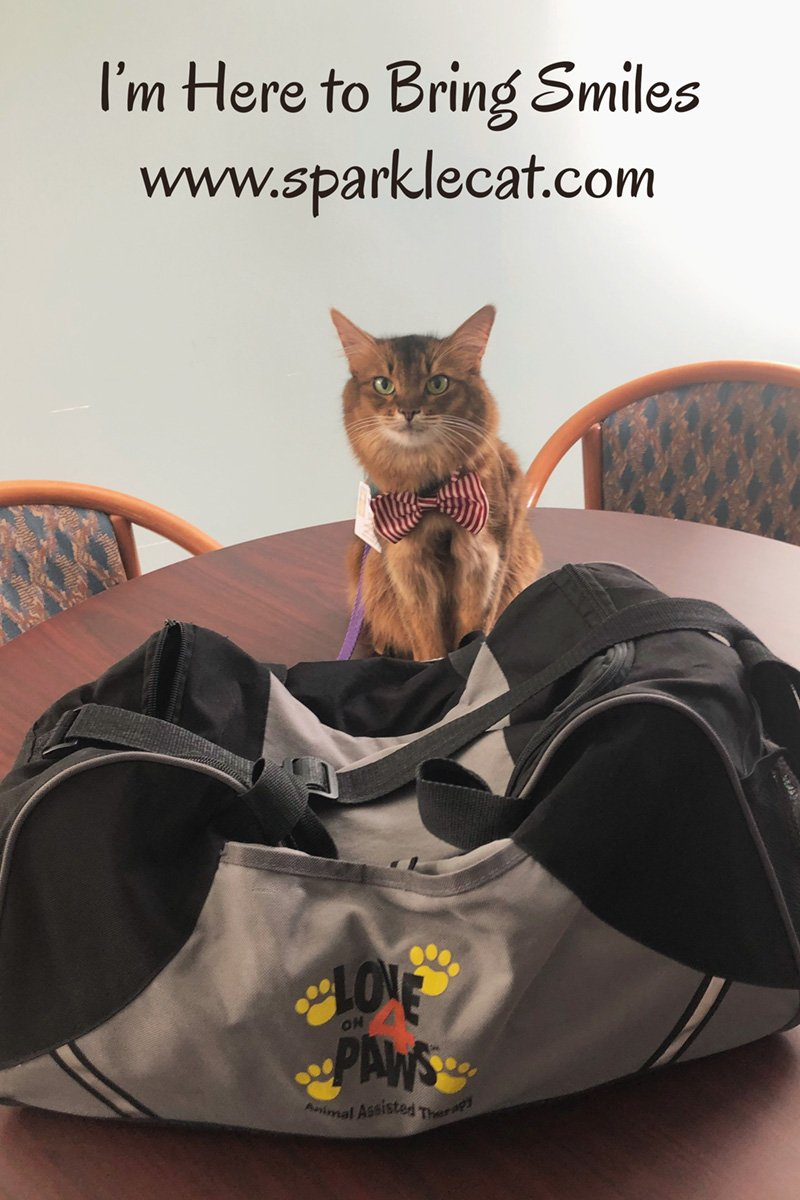 Summer brings smiles to the hospital on her latest therapy cat visit.