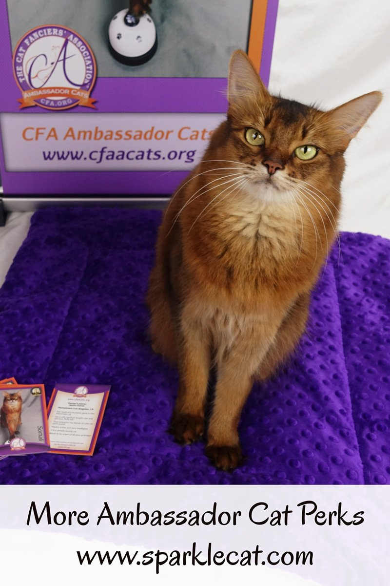 As an Ambassador Cat for CFA, Summer gets her own banner and trading cards.