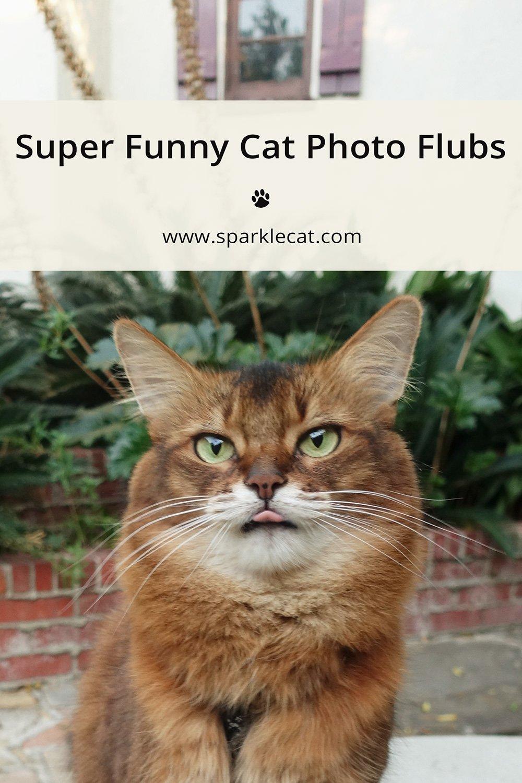 Super Funny Photo Flubs