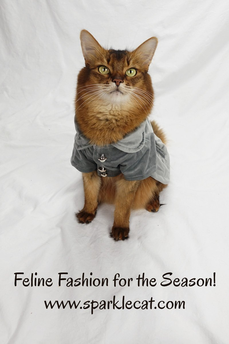 Summer shares some feline fashion for the upcoming holiday season.