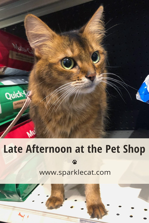 Late Afternoon Pet Shop Visit