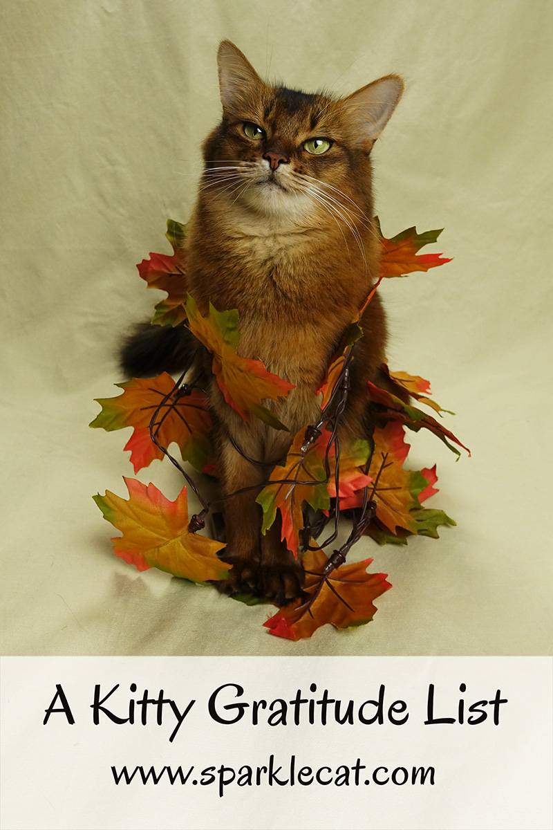 Summer has a kitty gratitude list for Thanksgiving.