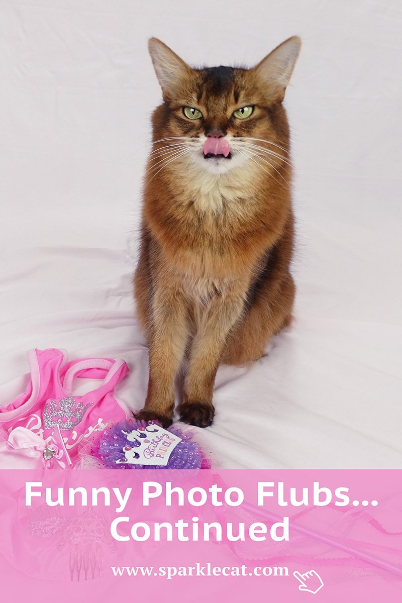 Funny Photo Flubs... Continued