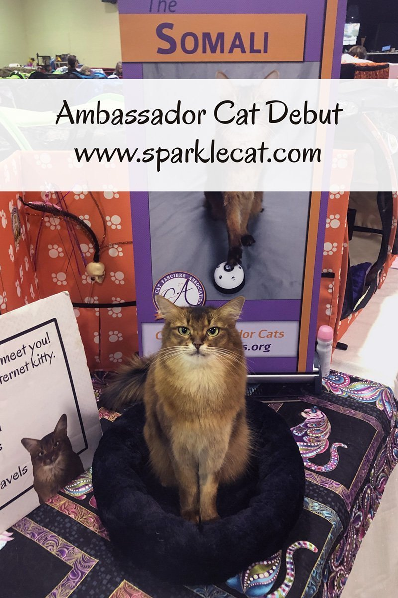 Ambassador Cat Debut