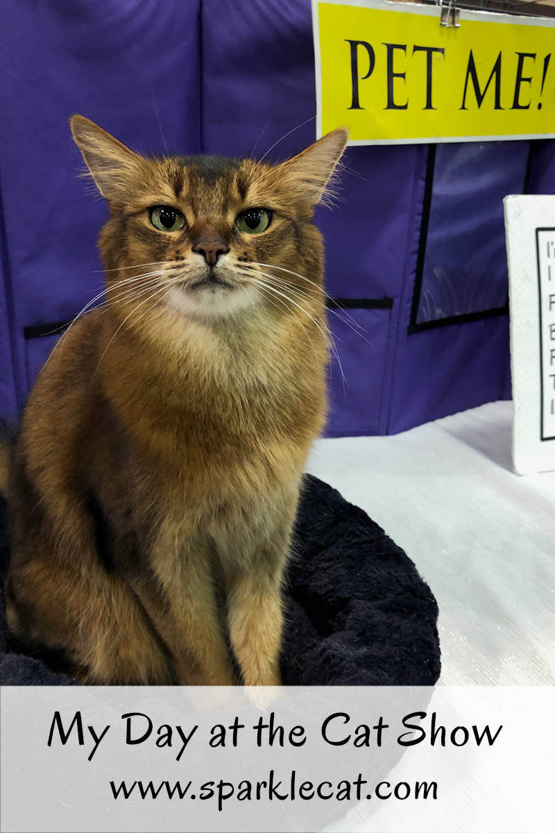 Summer has a fun time at the cat show, while two of her relatives compete.