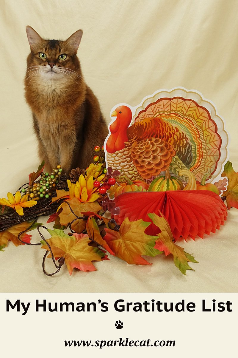 My Human\'s Thanksgiving Gratitude List... About Me!