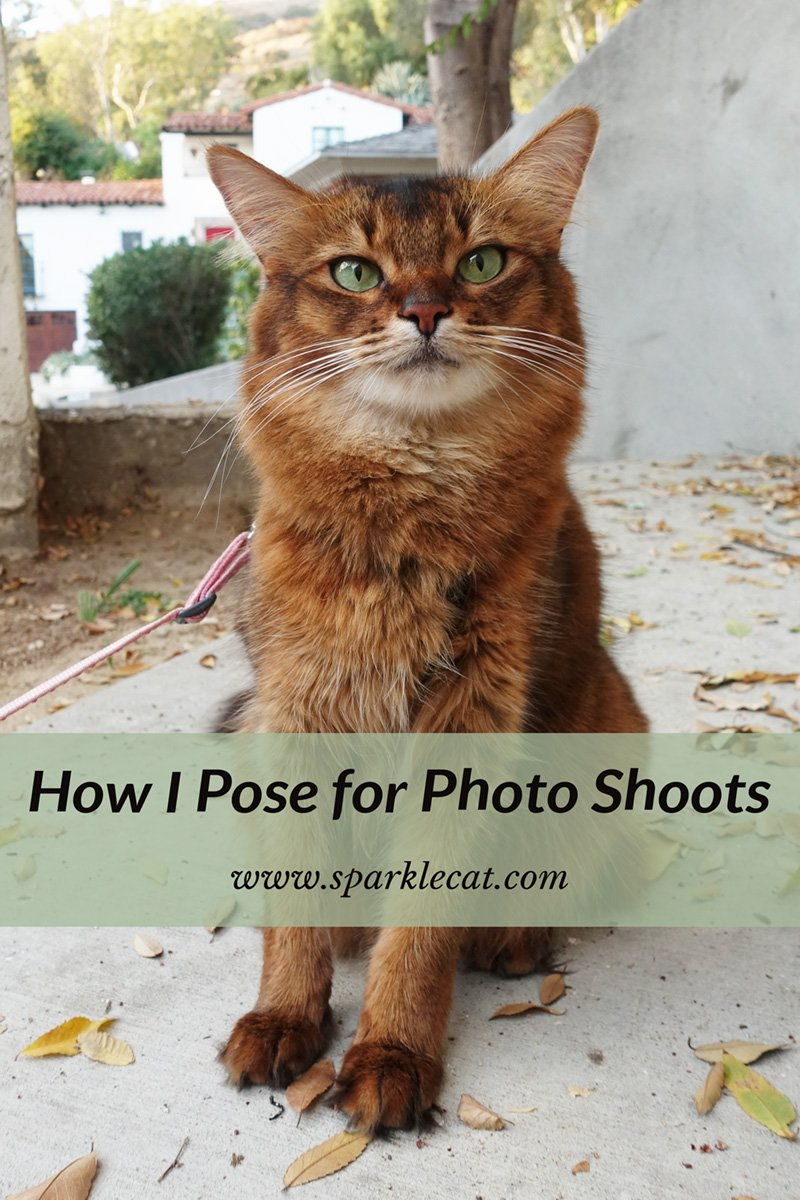 How I Pose for Photo Shoots Outside