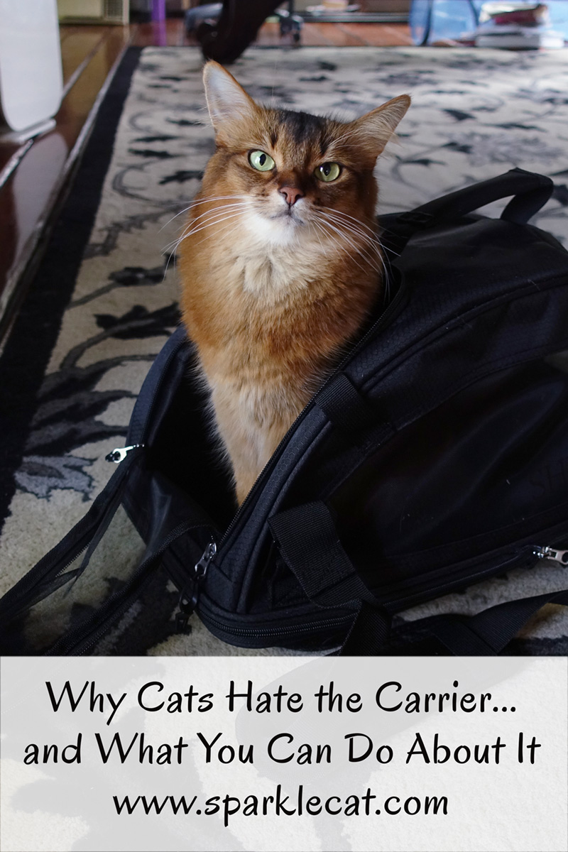 Why cats hate the carrier... and what you can do about it.