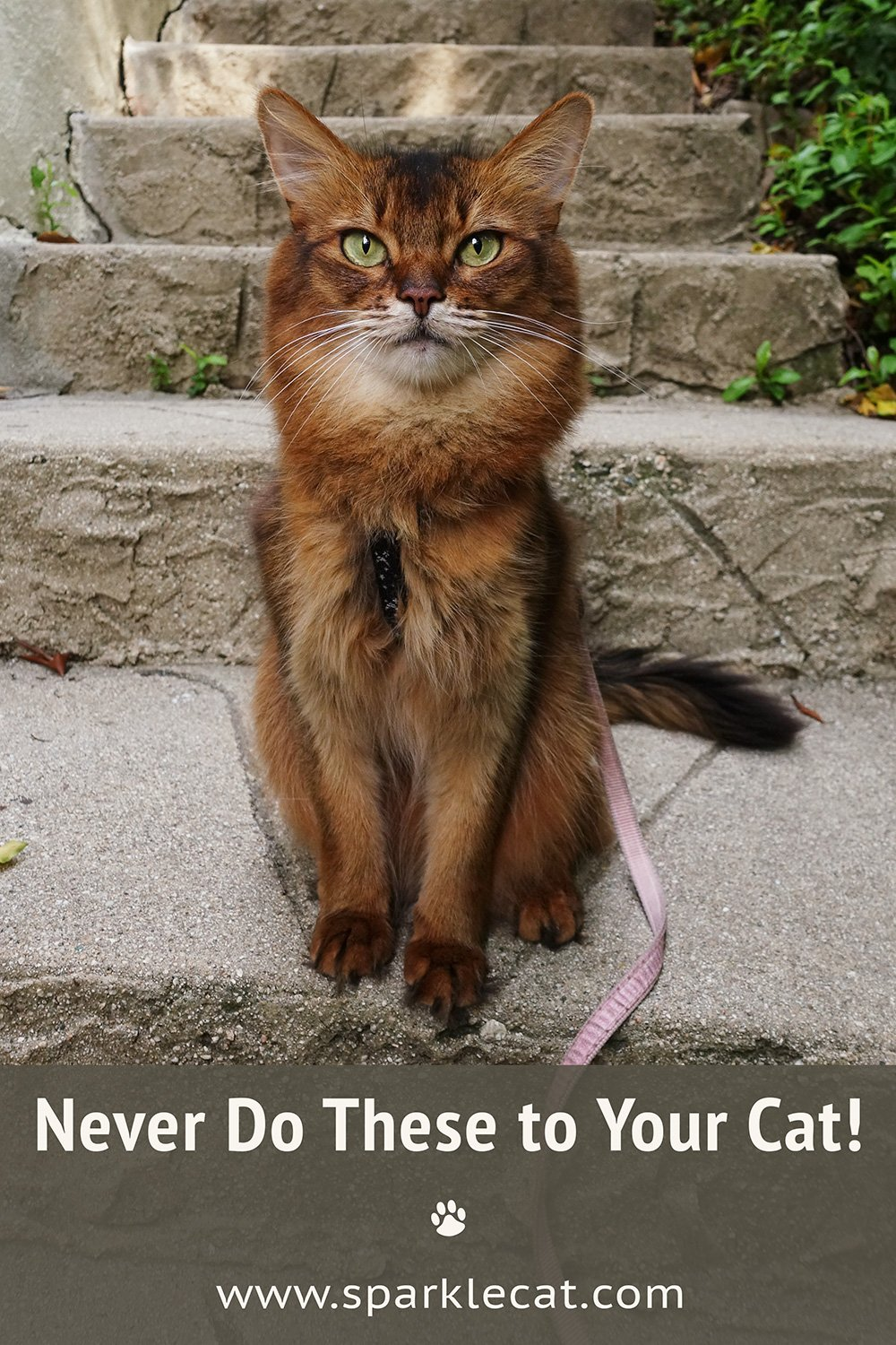 Things You Should Never Do to Your Cat… and How I React to Them