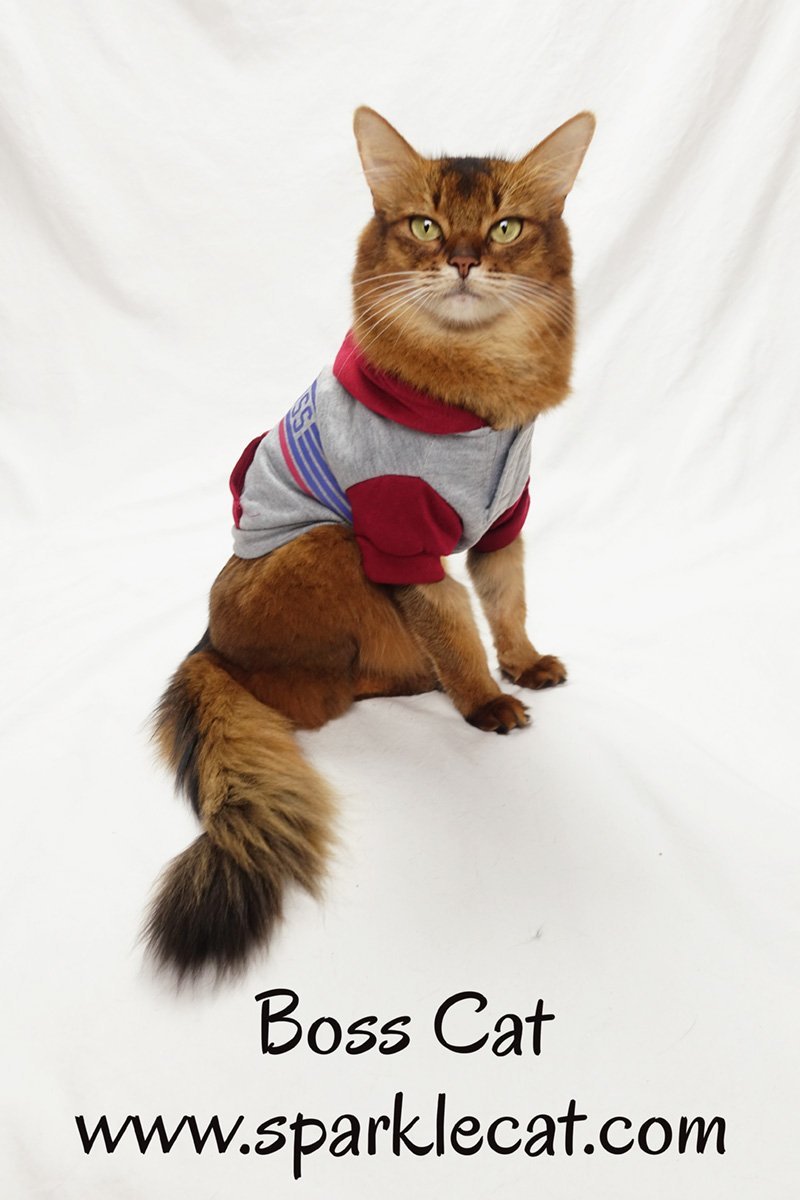 Summer gets a sweatshirt that proves she is a boss cat.