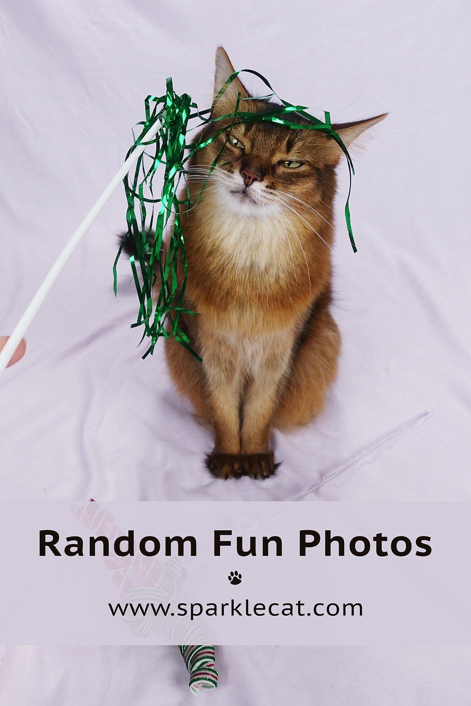 Random Fun Photos