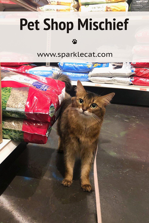Pet Shop Mischief