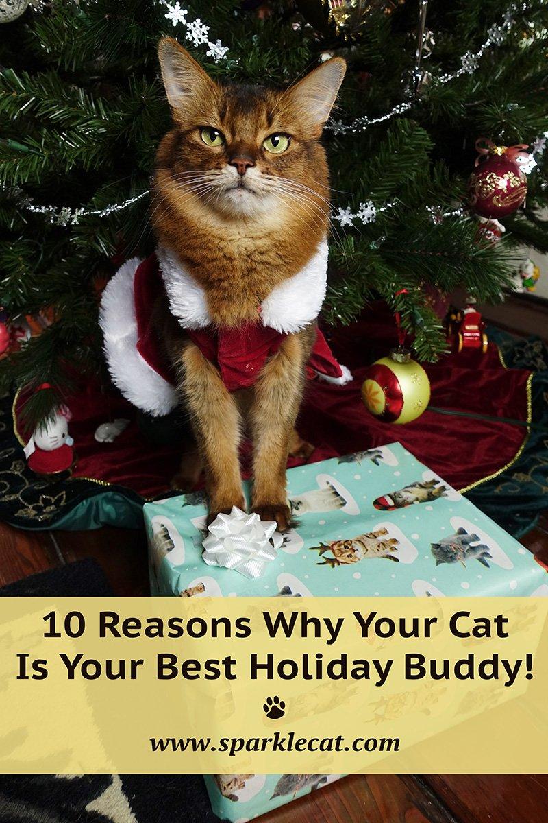10 Reasons Why Cats Make Great Holiday Buddies