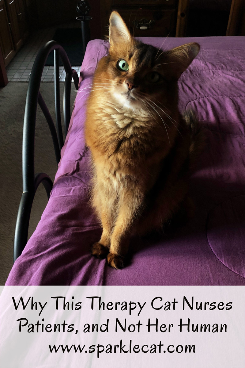 Why Summer doesn\'t do therapy cat work at home.