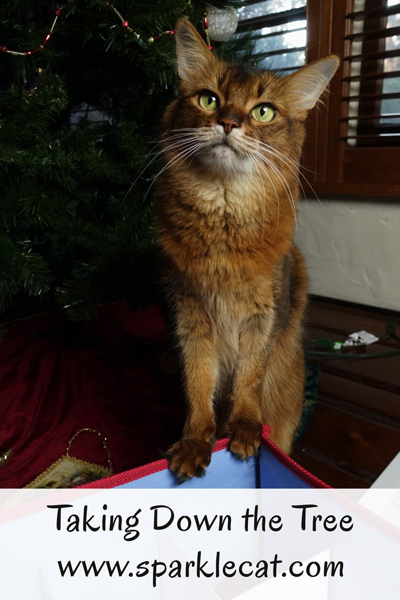 Summer\'s human takes down the tree as the holiday season winds down.