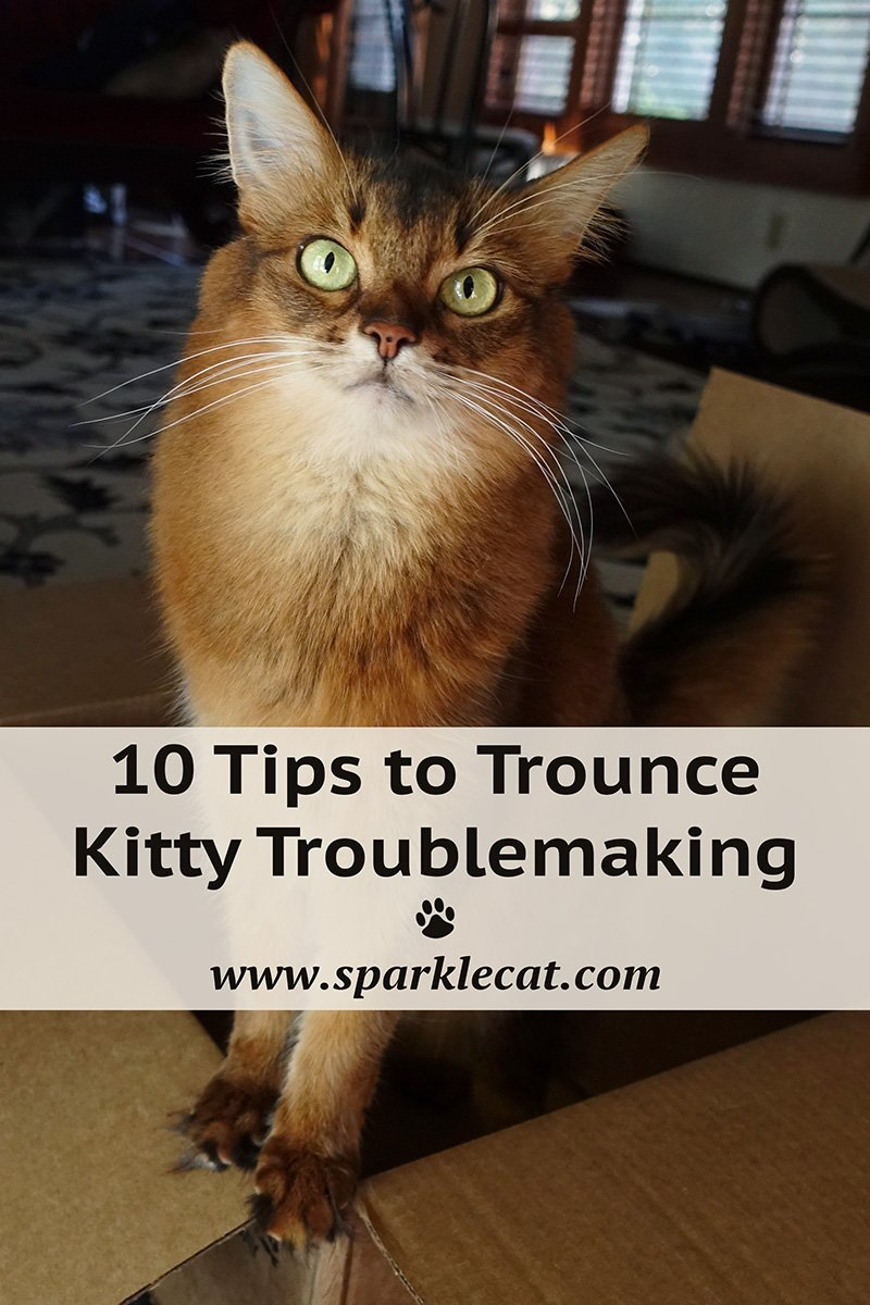 Ten Tips to Trounce Kitty Troublemaking