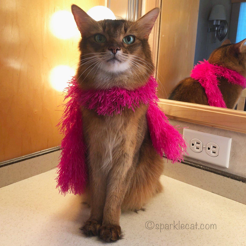 somali cat waiting for her scene in movie