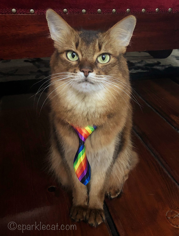 somali cat with rainbow necktie