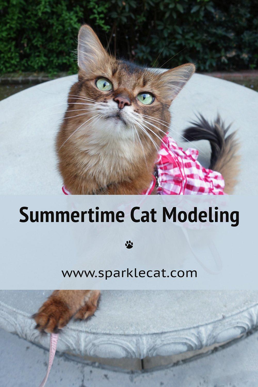 Summertime Cat Modeling